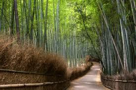 Arashiyama -La zona oeste de Kioto