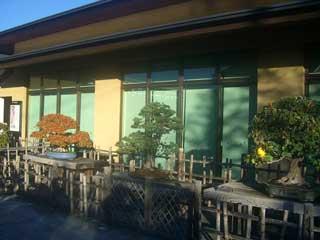 El bonsai y los jardines japonesas en Japón