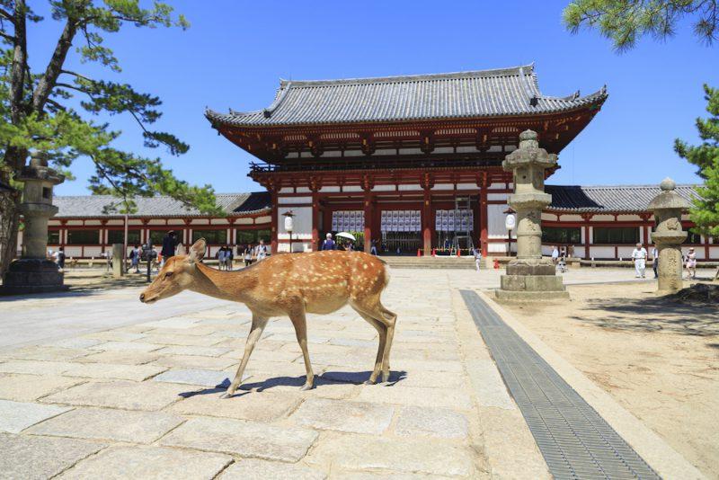 Osaka y Nara