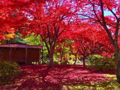 El otoño en Japón