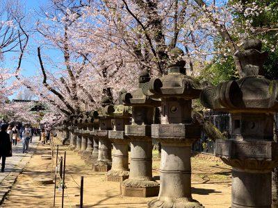 Sakura o Cerezo en Japón