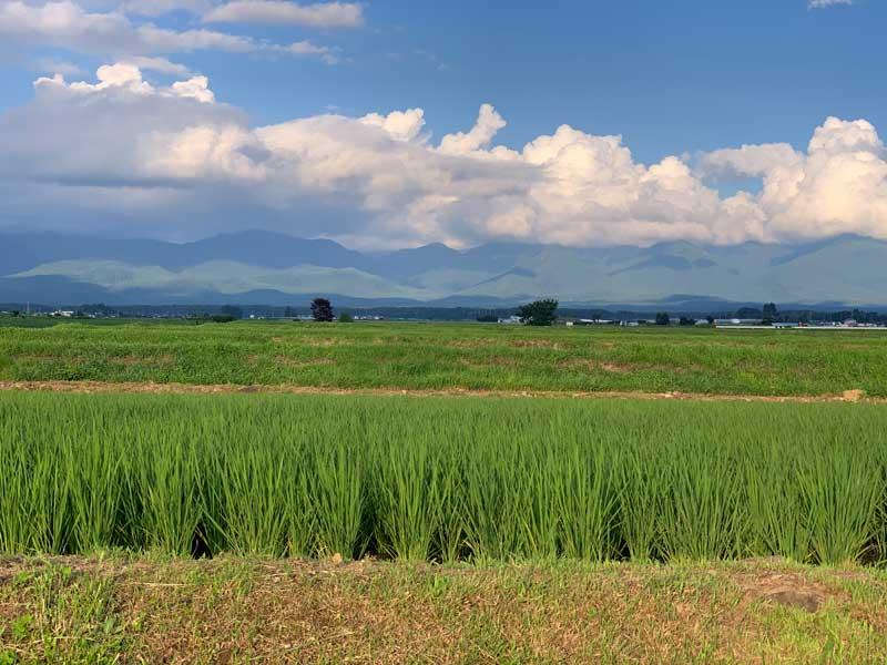 paisaje de japon